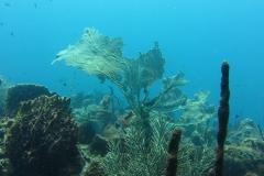 3 corail
